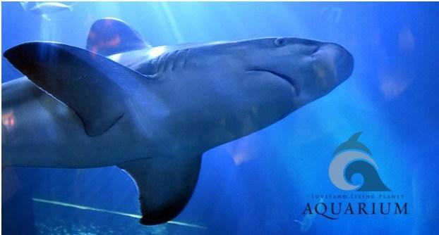 iHeartMedia Living Planet Aquarium Shark Sweepstakes