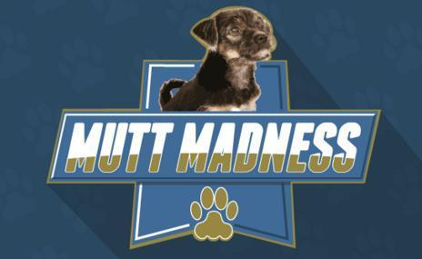 95.7 BEN-FM Mutt Madness Giveaway – Win Cash Prize