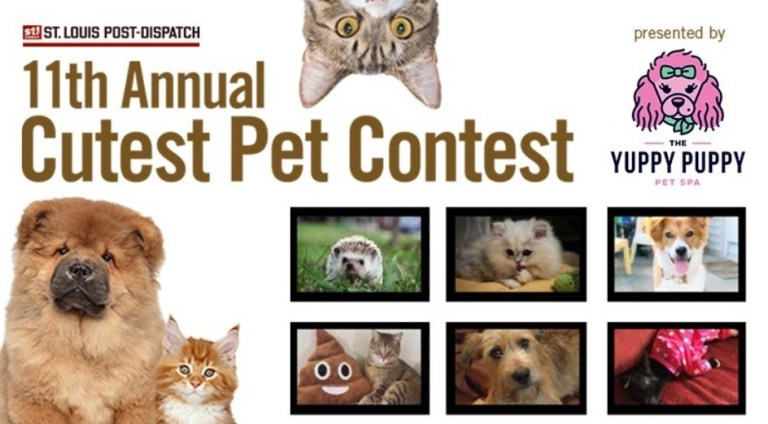 Dispatch 11th Annual Cutest Pets Contest