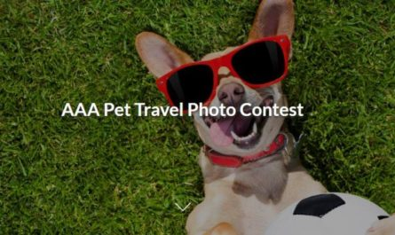 AAA Pet Travel Photo Contest