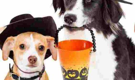 96.5 KOIT Halloween Pet Photo Contest