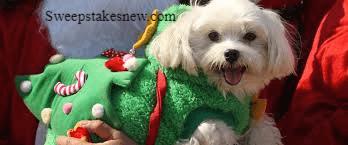 96.5 KOIT Santa Paws Pet Photo Contest