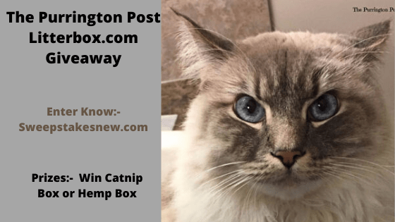 The Purrington Post Litterbox.com Giveaway