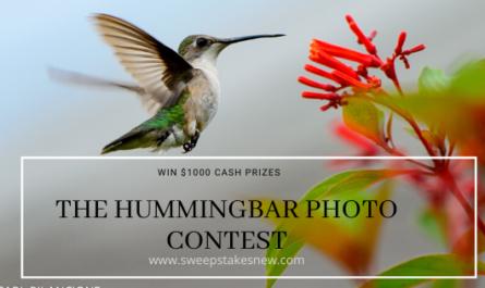 The Hummingbar Photo Contest