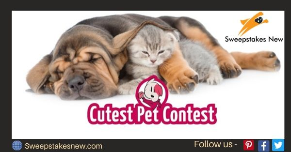 Cherry Insurance Cutest Pet Contest