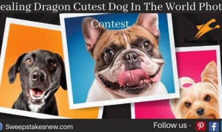 Healing Dragon Cutest Dog In The World Photo ContestHealing Dragon Cutest Dog In The World Photo Contest