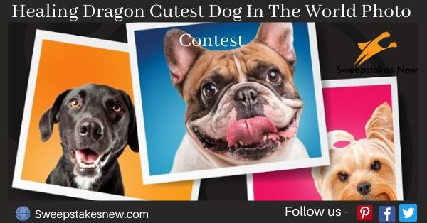 Healing Dragon Cutest Dog In The World Photo Contest