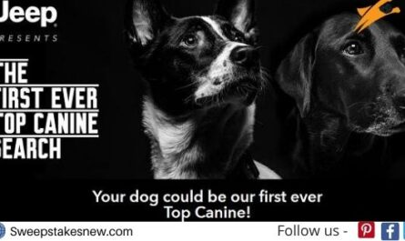 Jeep Brand's Top Canine Search Contest