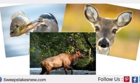 Journal of Wildlife Photography Sweepstakes