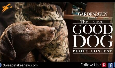 Garden and Gun Good Dog Contest