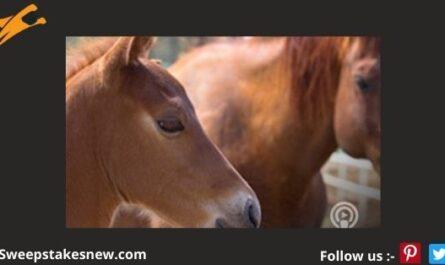 Purina Full Rein Extraordinary Horse Contest